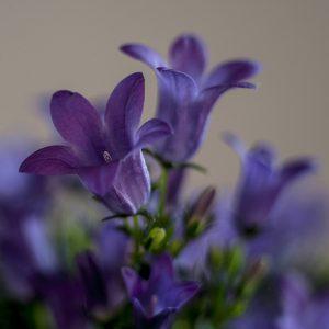 Juergen Maicher - Blume1