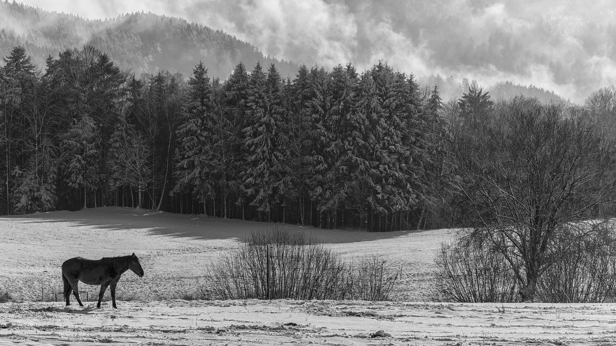 Winterlandschaft – von Jürgen Maicher