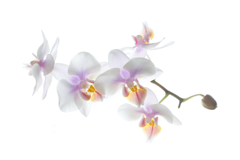 Orchidee – von Jörg Schreier