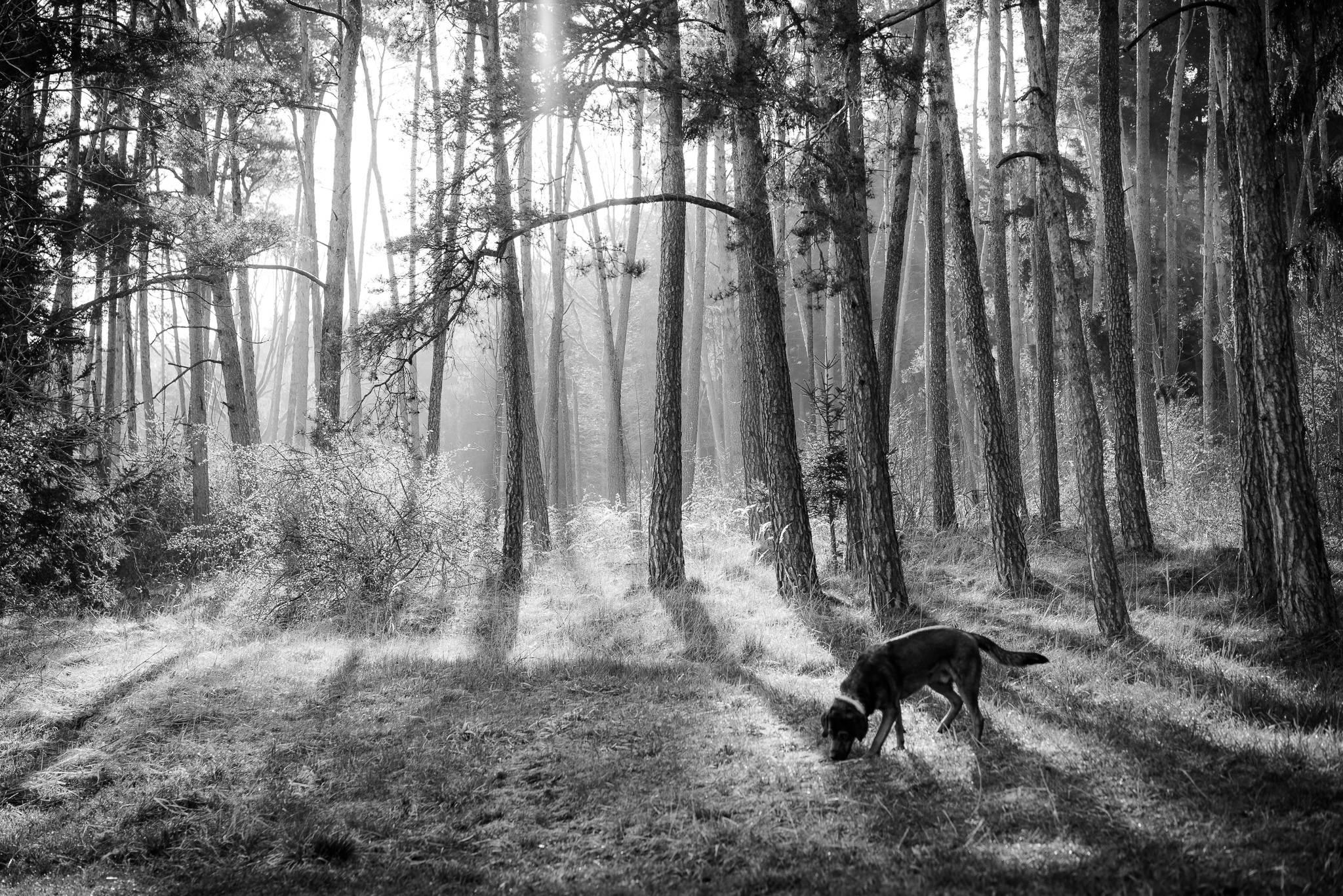 Awakening – von Jörg Schreier