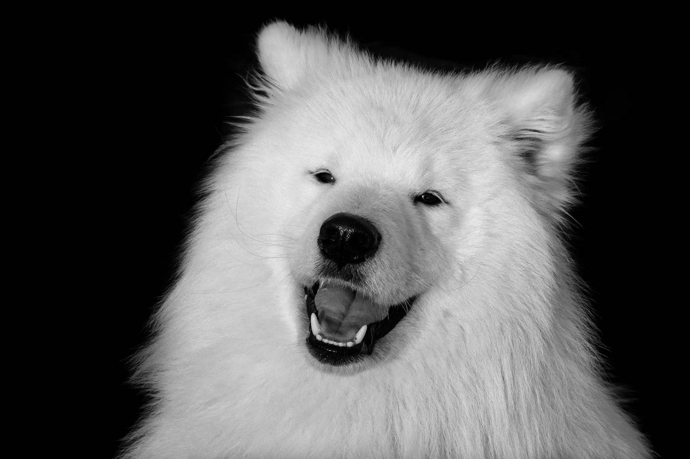 Friedrich Weigel - lachender Hund